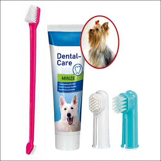 Zahnpflege-Set + Zahncreme »Minze«