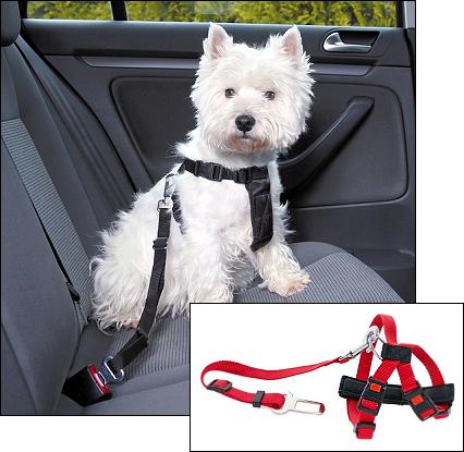 Sicherheitsgurt für kleine Hunde
