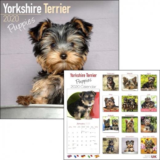 Yorkie-Puppys / Kalender 2020